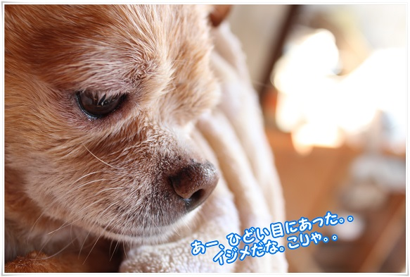 IMG_4570ijime.jpg