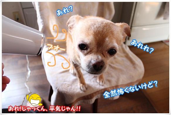 IMG_4572kowakunai.jpg