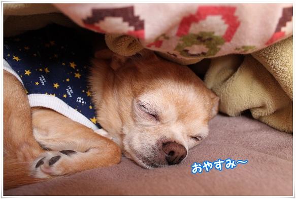 IMG_4636oyasumi.jpg