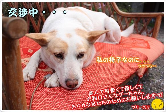 IMG_4733kousyoutyuu.jpg