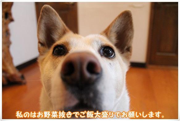 IMG_4798onegai.jpg