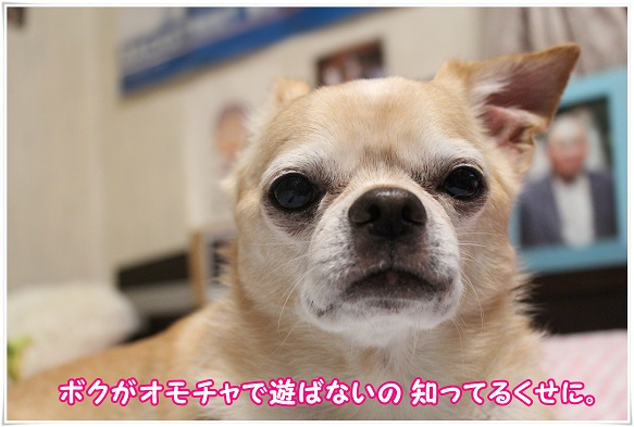 IMG_4891.jpg