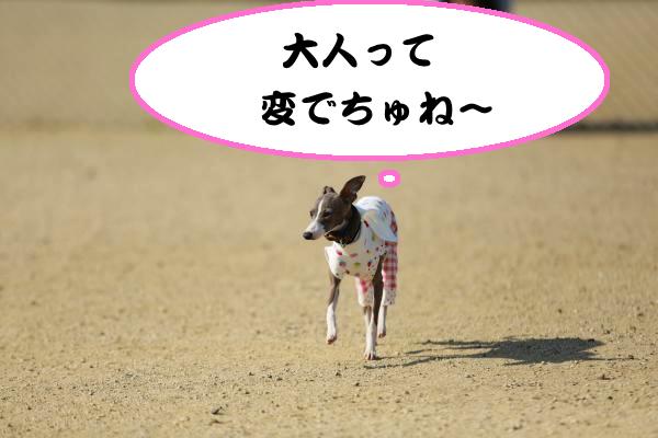 IMG_2598_convert_20140507194334.jpg