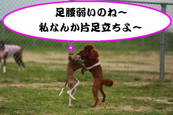 IMG_5635_convert_20140721133550.jpg