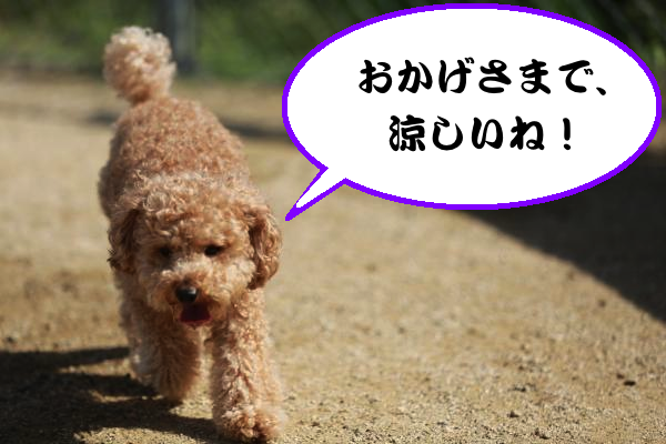 IMG_6809_convert_20140529202739.jpg