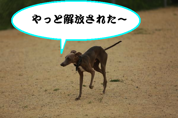 IMG_7378_convert_20140603203728.jpg