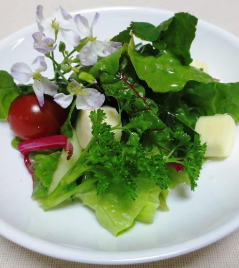 鎌倉野菜 ベビーリーフサラダ B
