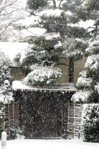 2014大雪 近所②