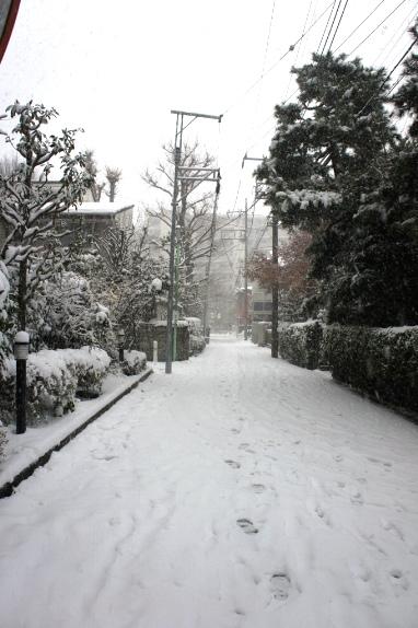 2014大雪 近所