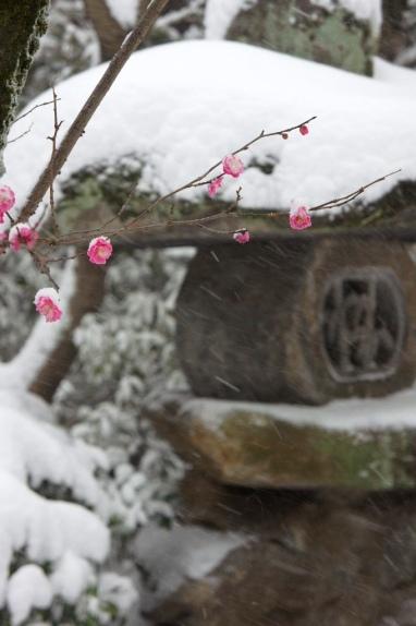 2014大雪 紅梅と灯籠