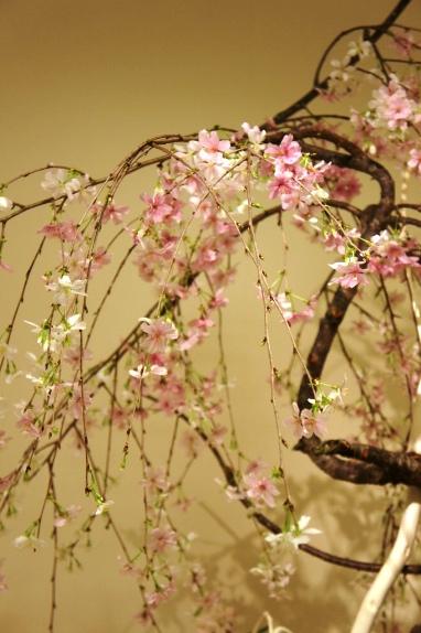 2014春花展 シダレザクラ