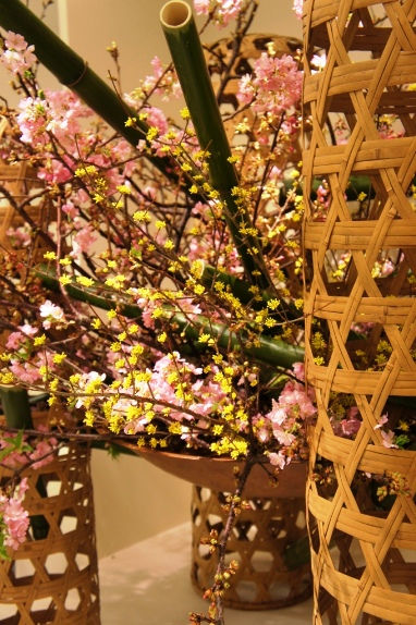 2014春花展 桜とレンギョウ