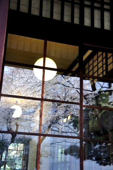 2014上野博物館 硝子戸の桜