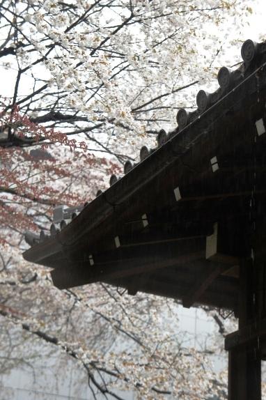 2014上野博物館 屋根にふりしきる