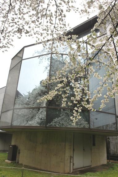 2014上野博物館 平成館裏4