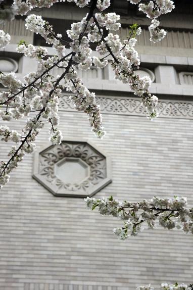 2014上野博物館 本館壁と桜2