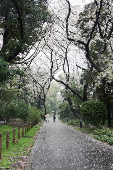 2014上野博物館 遊歩道
