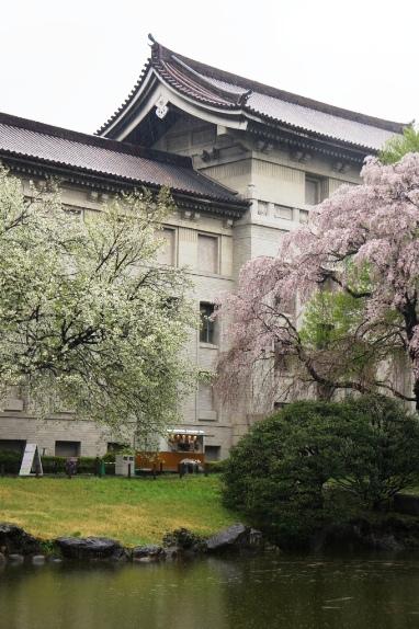 2014上野博物館 裏の桜1