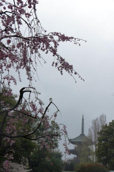 2014上野花見 遠くにかすむ五重塔