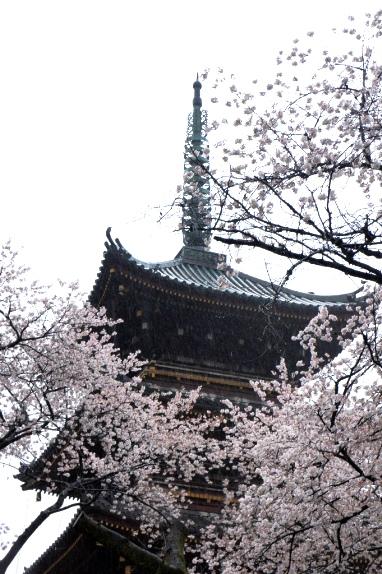 上野の五重塔A
