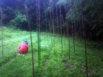畑に竹が侵入