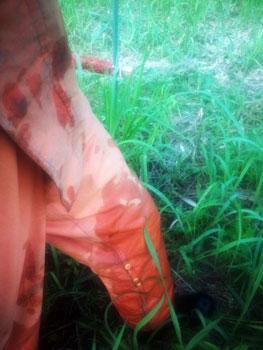 朝露に濡れるカッパ