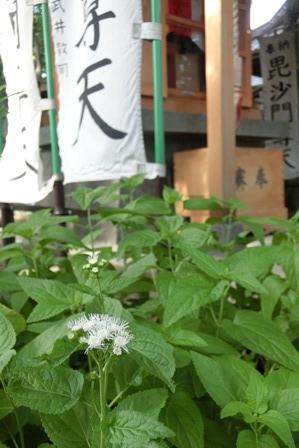 春日神社 (7)