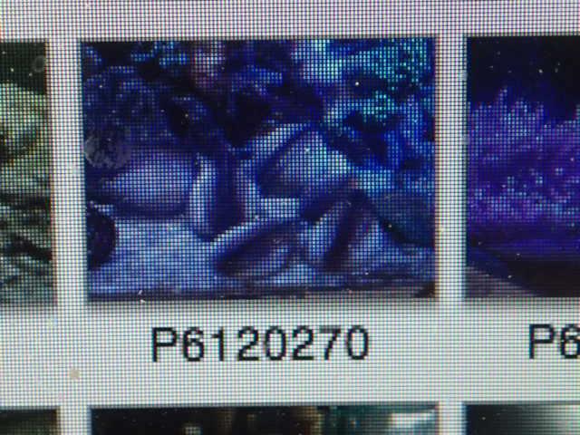 P6220058.jpg