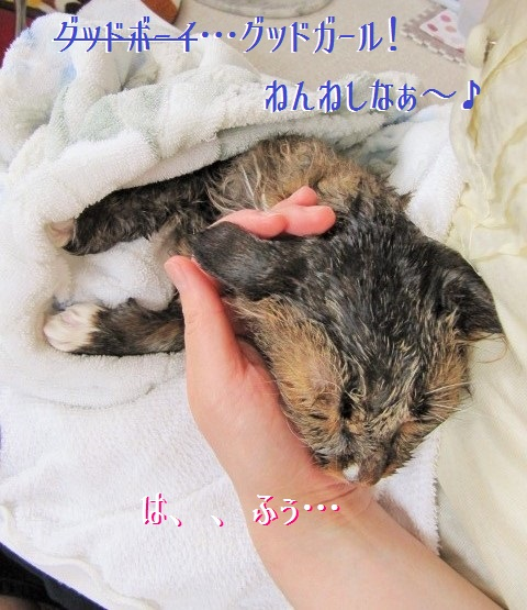 IMG_6780_20140701214022611.jpg