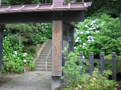 妙本寺①IMG_2300