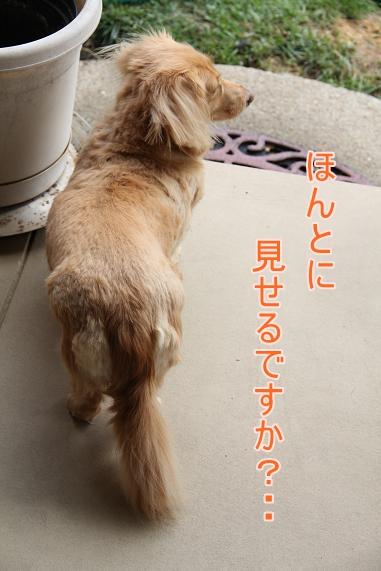 IMG_3482.jpg