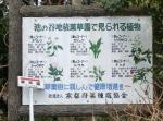 薬草園の看板