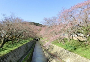 琵琶湖疏水