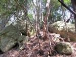 石の山道2
