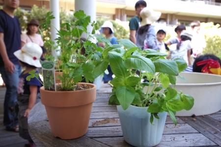 140615foreseum_community garden
