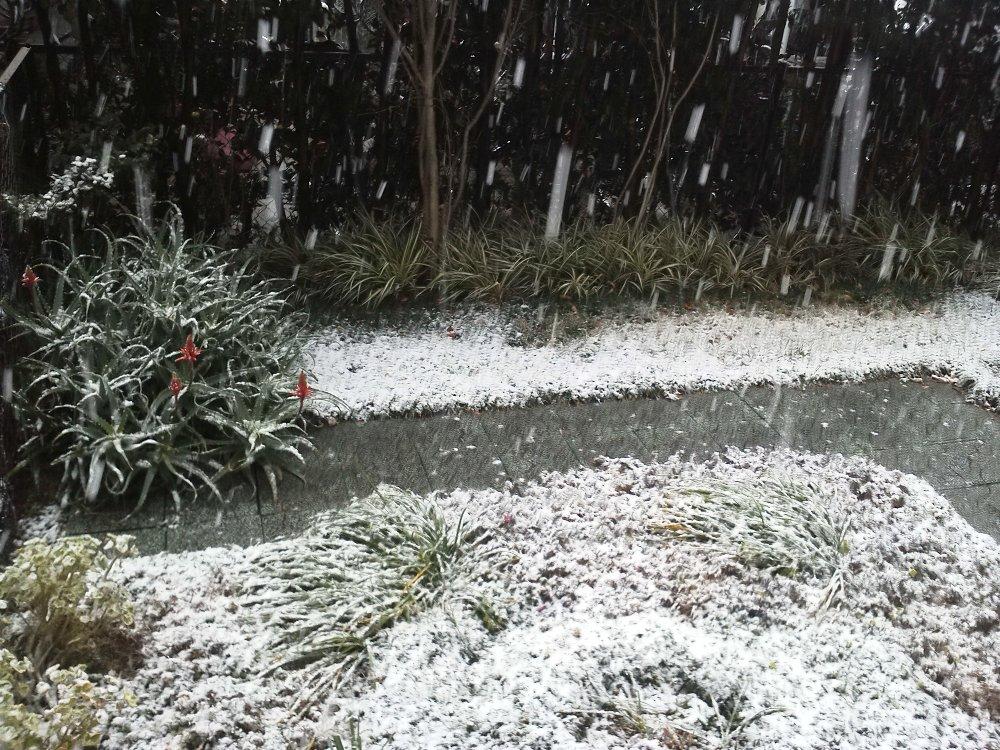 F1001457庭の初雪2月4日アロエの赤い花