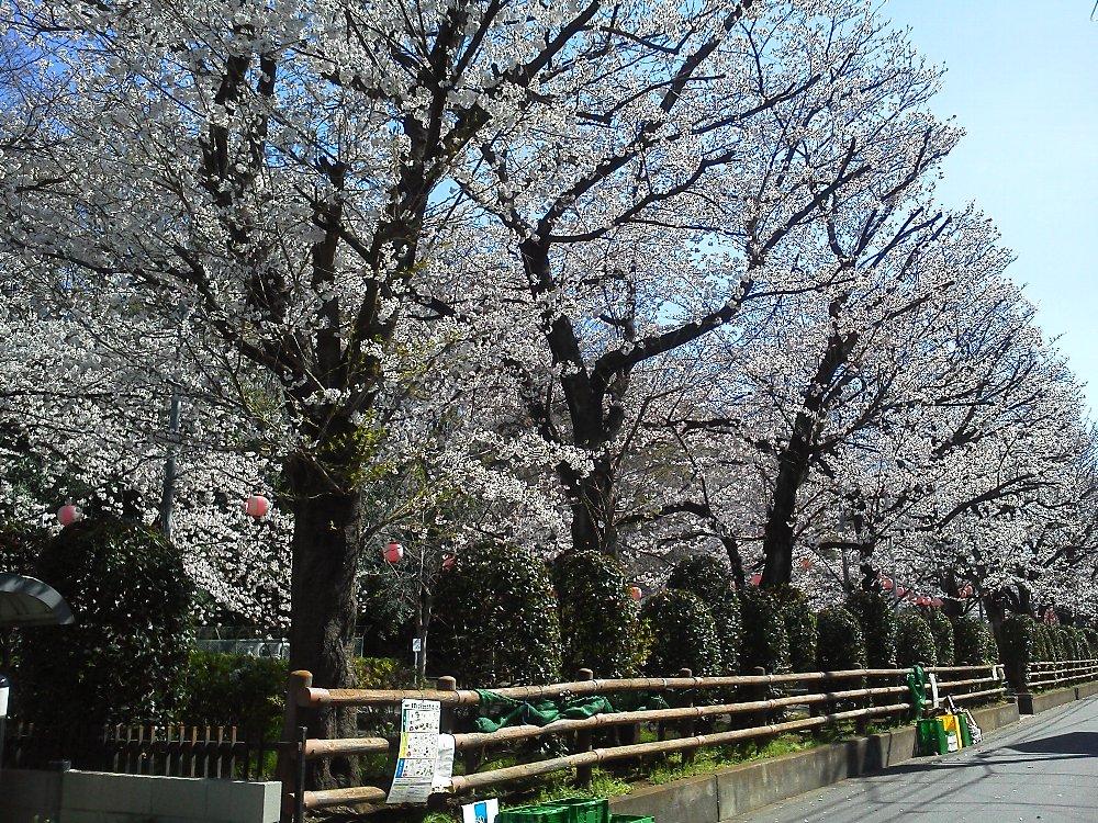 F1000123城山公園桜
