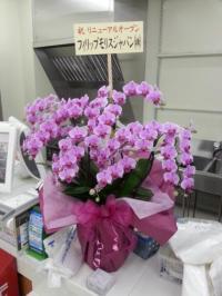 20140515_点野改装花(200)