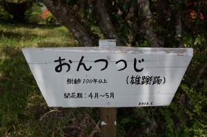 R0010110-1.jpg