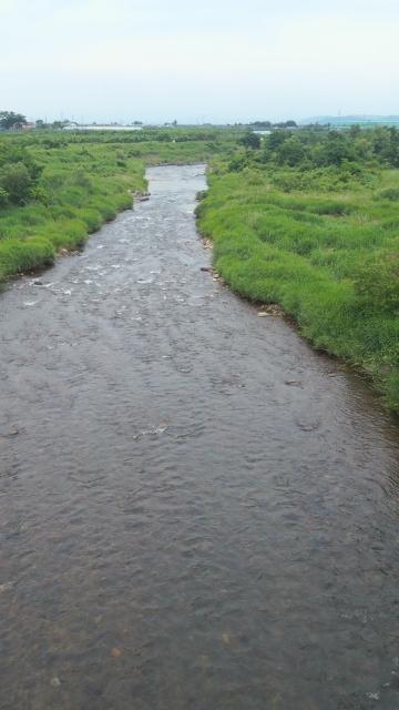 鮎が追っている摺上川.でも釣ることが出来ない川
