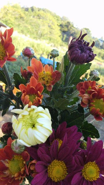 スプレー菊の花束