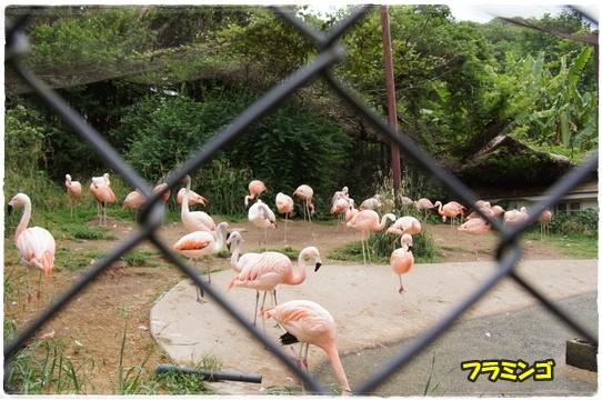 zoo22