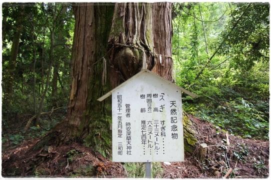 oosugi1