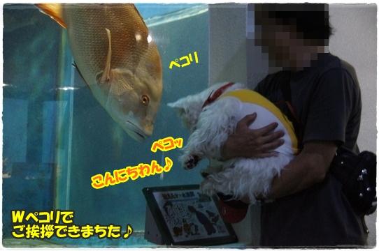 aquarium20