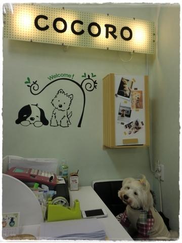 cocoro2