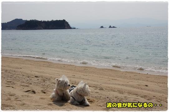 koigahama4