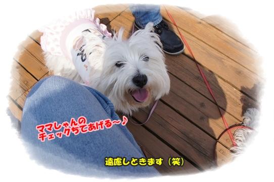 koigahama10