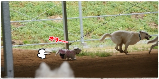 run12
