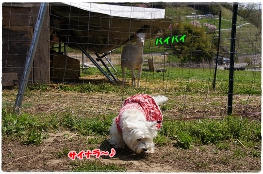 ogawamura2