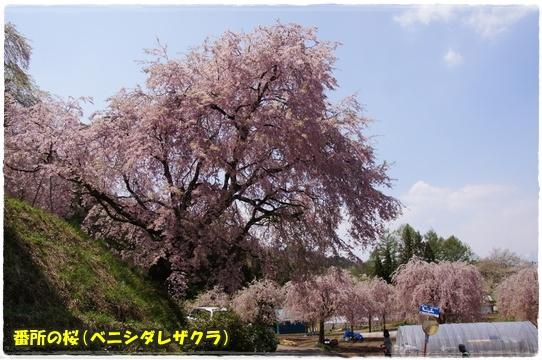 ogawamura5